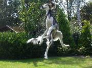 Kurse, Hundebesitzer, Haushund