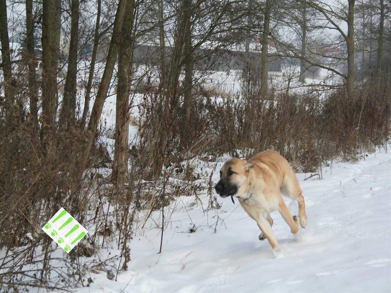 jagen mit hunden